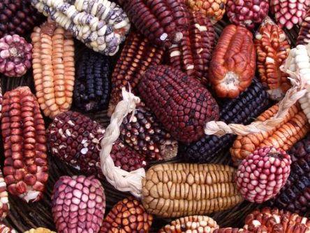 maíz perú